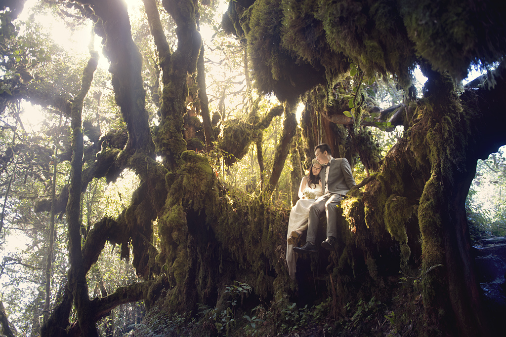 Mossy Forest Prewedding Prewedding Photography Cameron Highlands Malaysia